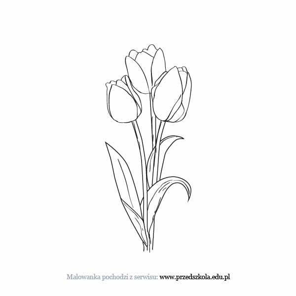 foto de Tulipany kolorowanka Darmowe kolorowanki i malowanki dla dzieci Tulipany do druku