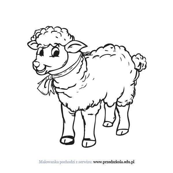 Owca Kolorowanka Darmowe Kolorowanki I Malowanki Dla Dzieci Owca