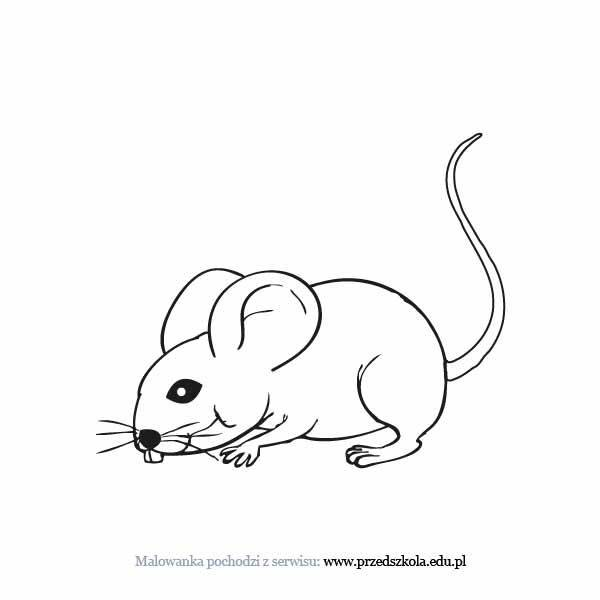 Mysz Kolorowanka Darmowe Kolorowanki I Malowanki Dla Dzieci Mysz