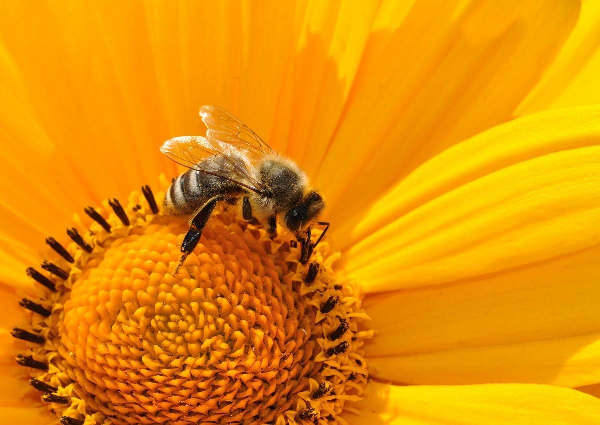 Ule I Pszczoły Scenariusz Hospitacji Dla Dzieci