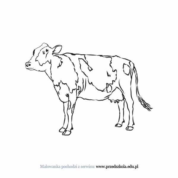 Krowa Kolorowanka Darmowe Kolorowanki I Malowanki Dla Dzieci