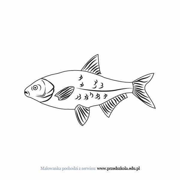 Ryba Kolorowanka Darmowe Kolorowanki I Malowanki Dla Dzieci Ryba