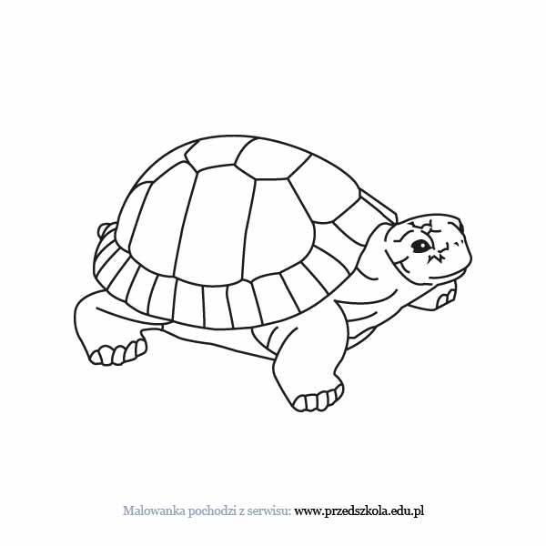 Kolorowanki Komiksy Do Druku Za Darmo Dla Dzieci I: Żółw Kolorowanka. Darmowe Kolorowanki I Malowanki Dla