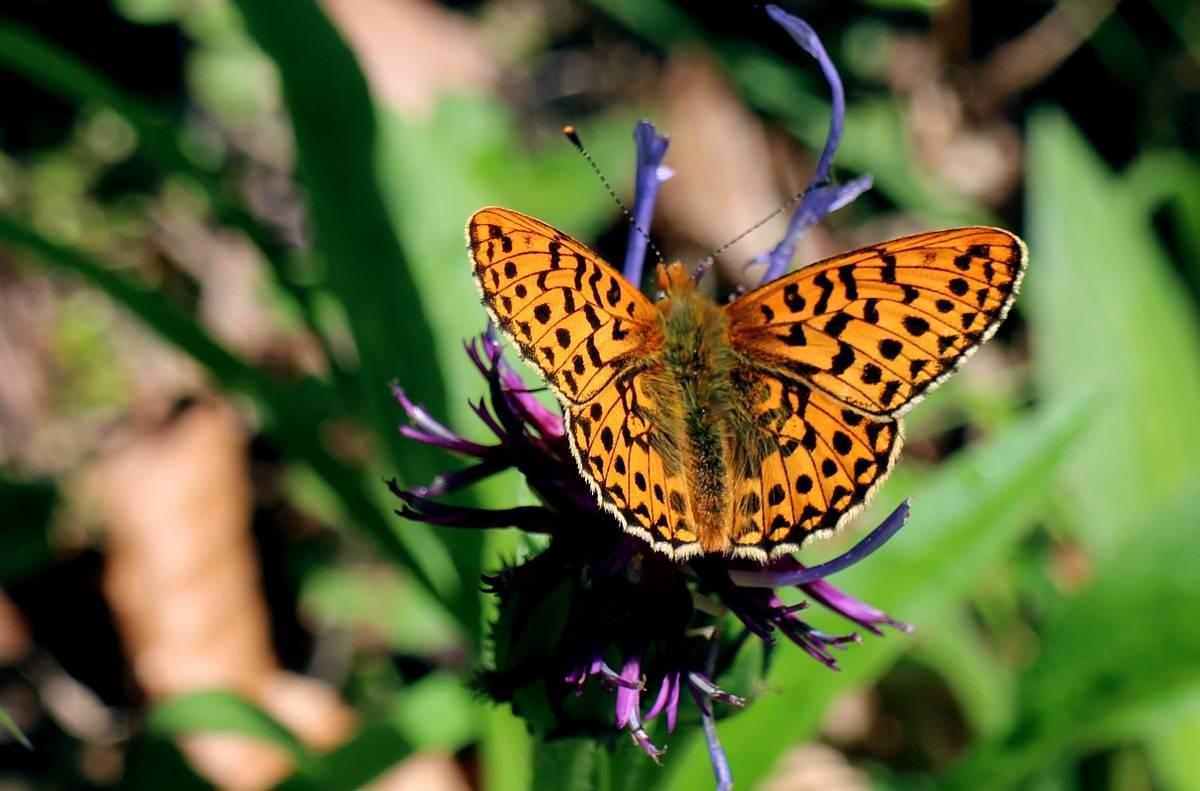 Motyle Poznanie Etapów Rozwoju Motyla Scenariusz Zajęć
