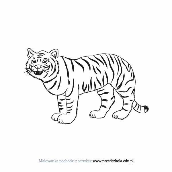 Tygrys Kolorowanka Darmowe Kolorowanki I Malowanki Dla Dzieci
