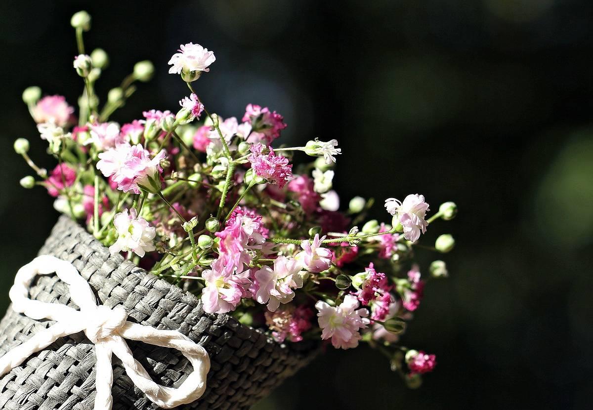 Kwiaty Dla Babci Buziak Dla Dziadka Scenariusz