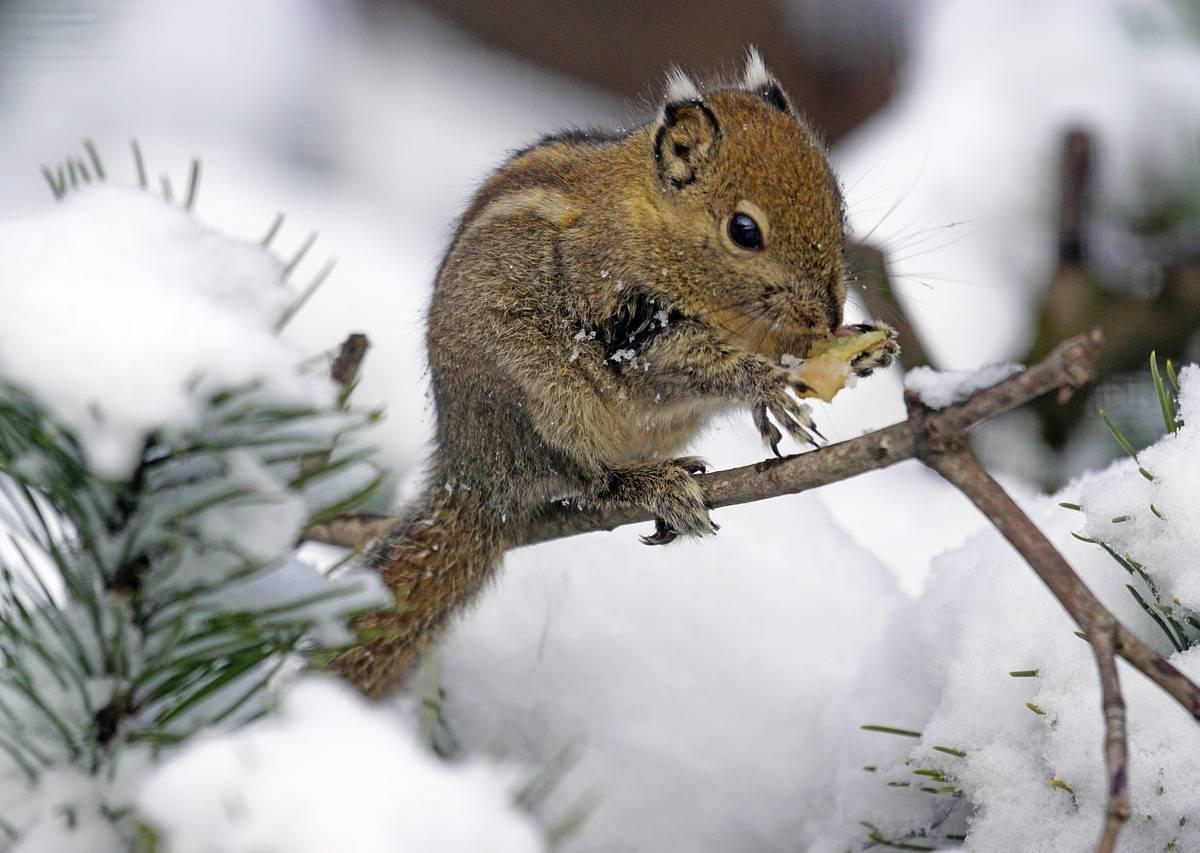 Zimą Opiekujemy Się Zwierzętami Leśnymi Scenariusz Zajęć