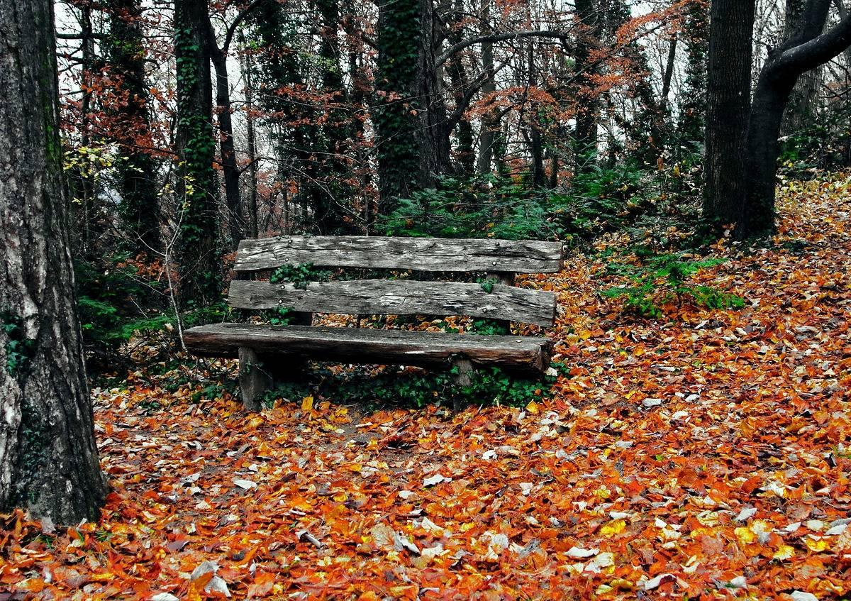 Kolory Jesieni Scenariusz Zajęć Dydaktycznych Jesień W