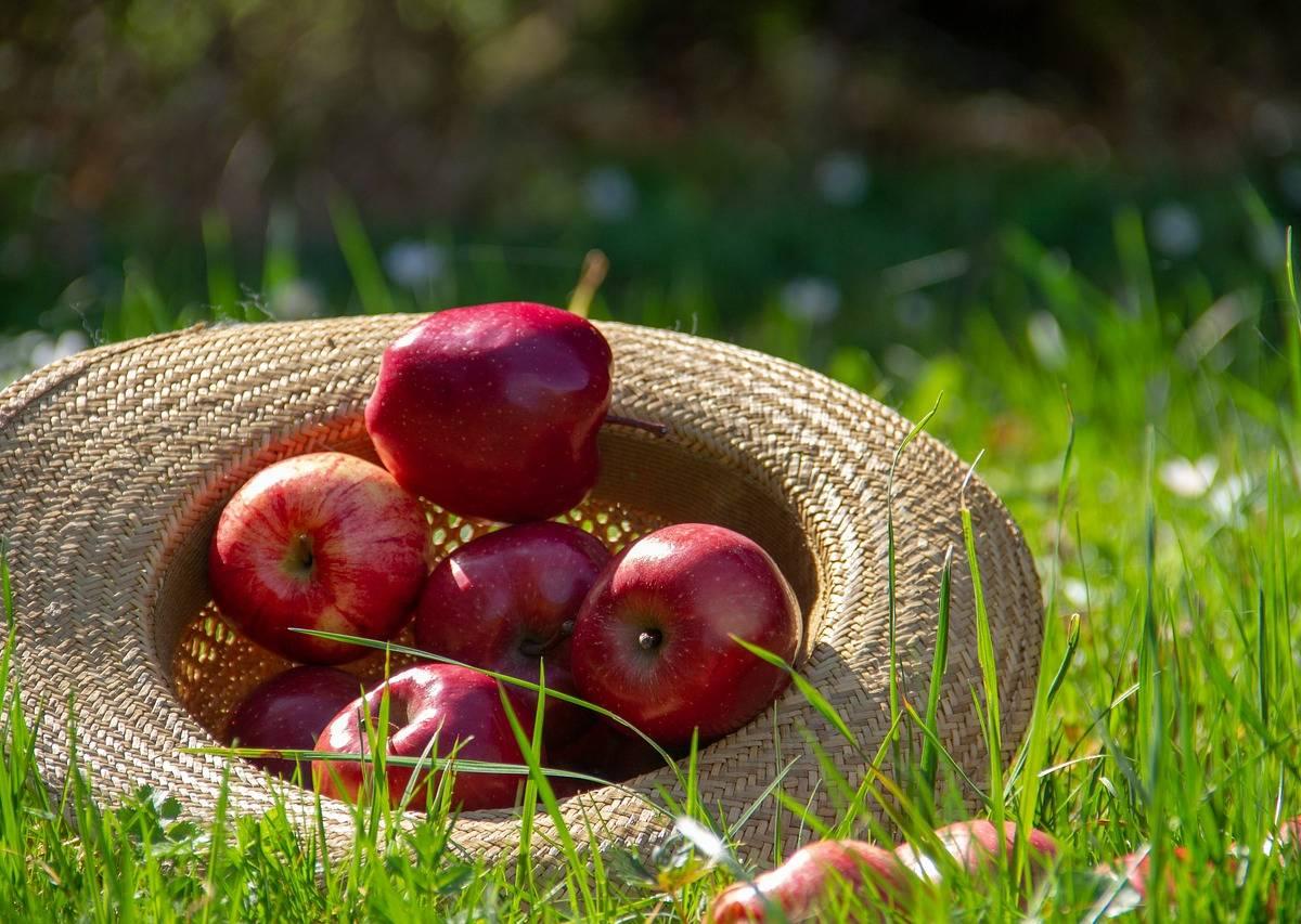 Dzień Czerwonego Jabłka Scenariusz Zajęć Dydaktycznych W