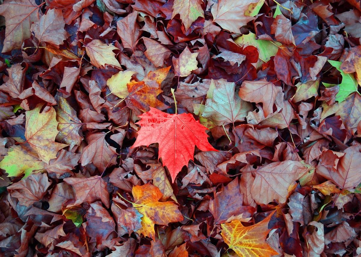 Szukamy Jesieni W Lesie Scenariusz Zajęć Z Obszaru