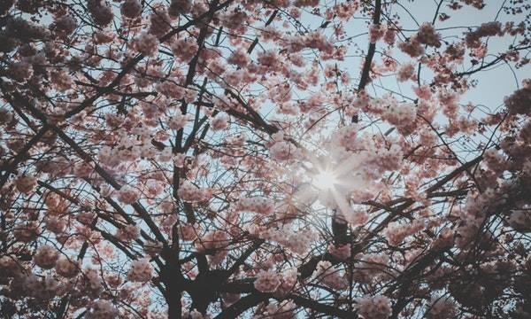 Wiersze Dla Dzieci Wiosna