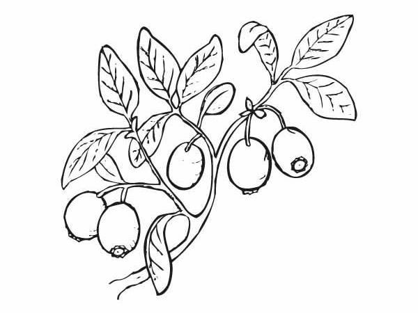 Owoce Kolorowanki Owoce Darmowe Kolorowanki I Malowanki Do Druku
