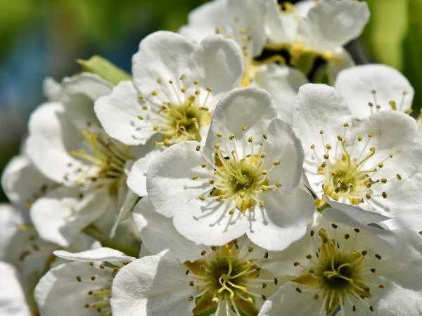 Pierwsze Kwiaty Wiosny Scenariusz Zajec Dla Dzieci 3 I 4 Letnich