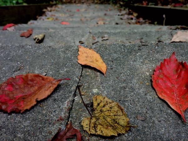 Wiersze Dla Dzieci Jesień