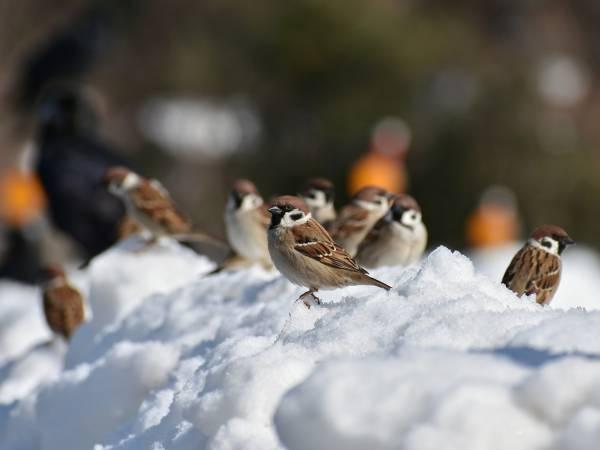 Zwierzęta W Zimie